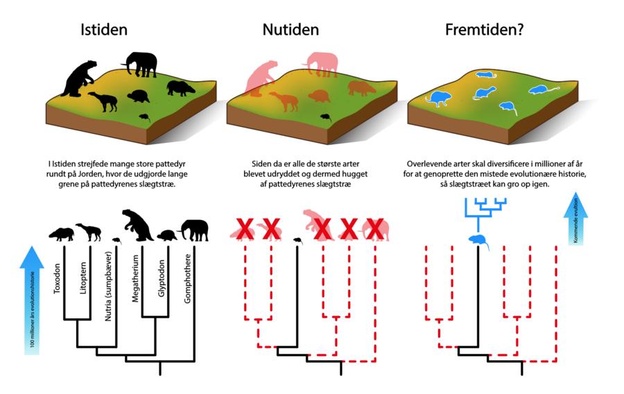 Infografica sulla eprdita di diversificazione delle specie di mammiferi
