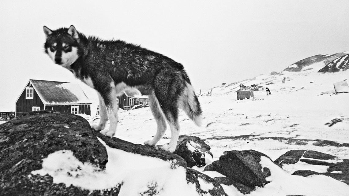 Risultati immagini per Artico. Ultima frontiera.