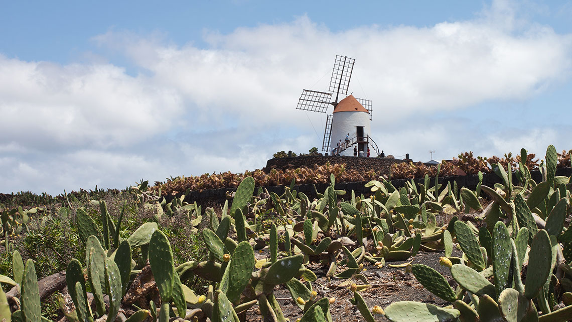 Premiato il jard n de cactus 4mila piante succulente in for Jardin de cactus lanzarote