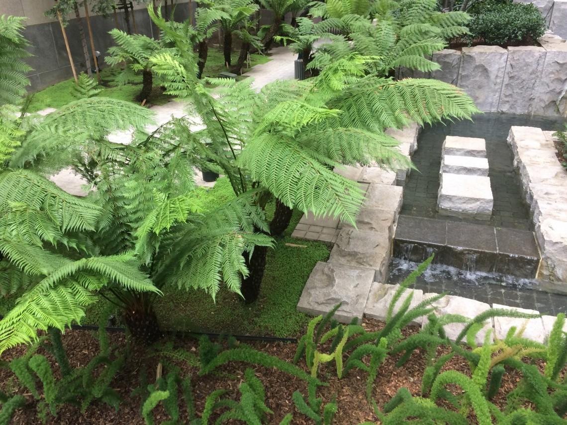 Piccoli Alberi Da Giardino i giardini segreti di san francisco, piccoli polmoni verdi