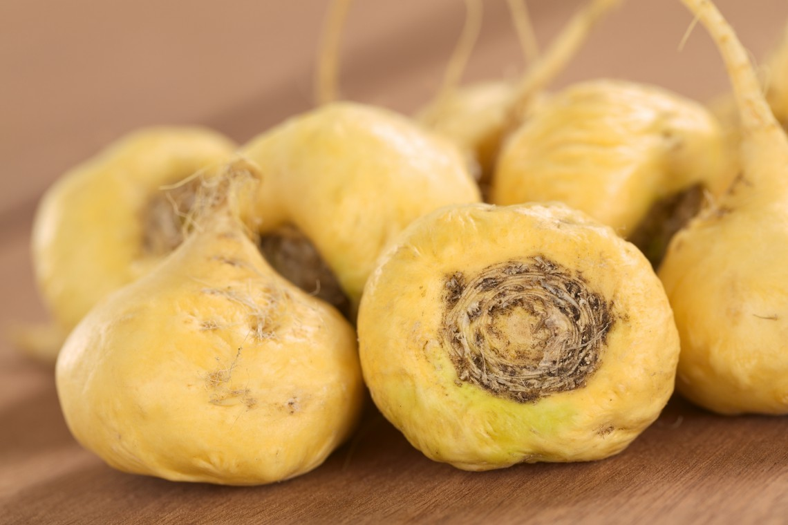 Fresh maca roots or Peruvian ginseng (lat. Lepidium meyenii) which are popular in Peru for their various health effects (Selective Focus, Focus on the maca roots in the front)