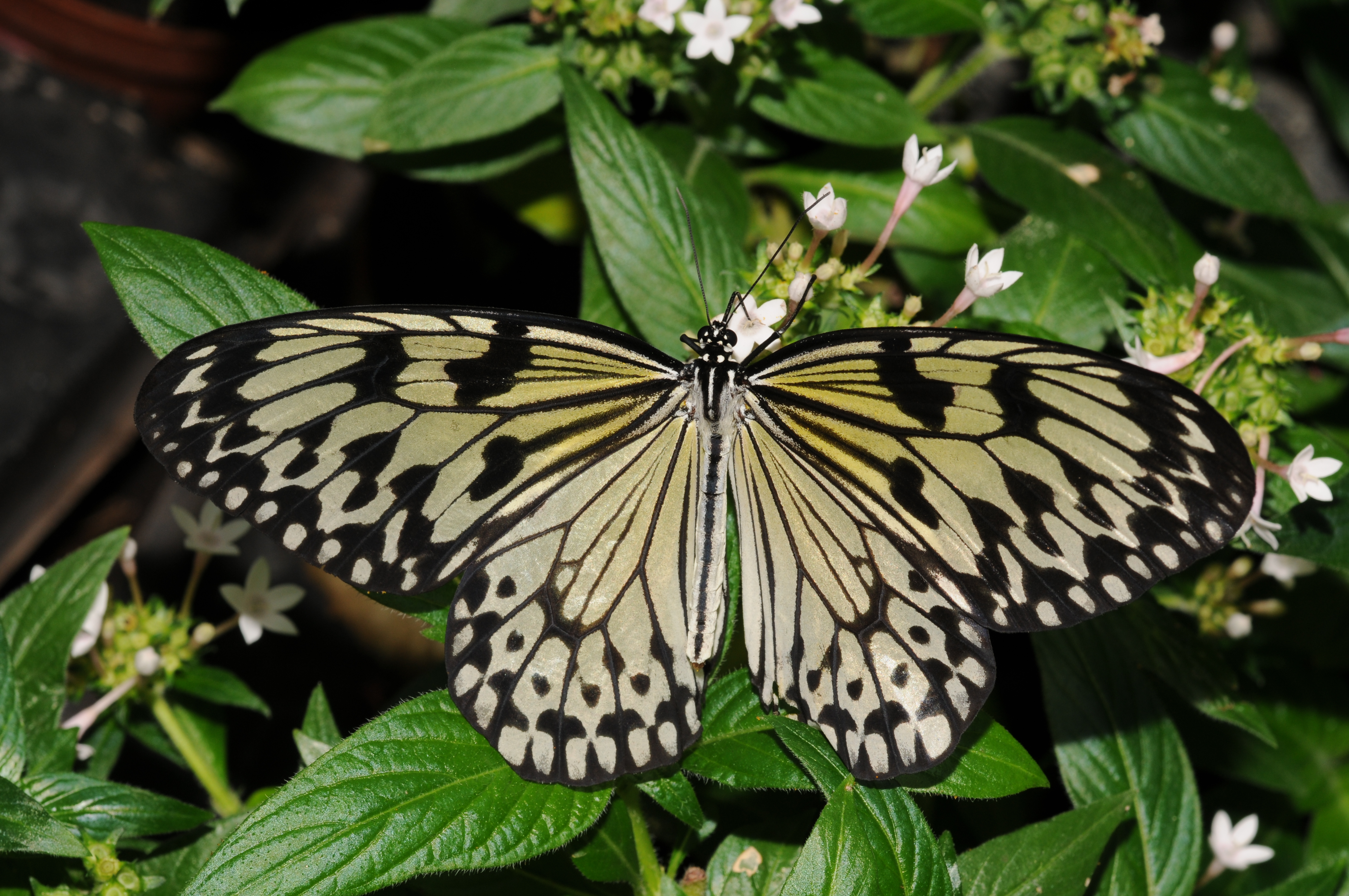 online incontri farfalle