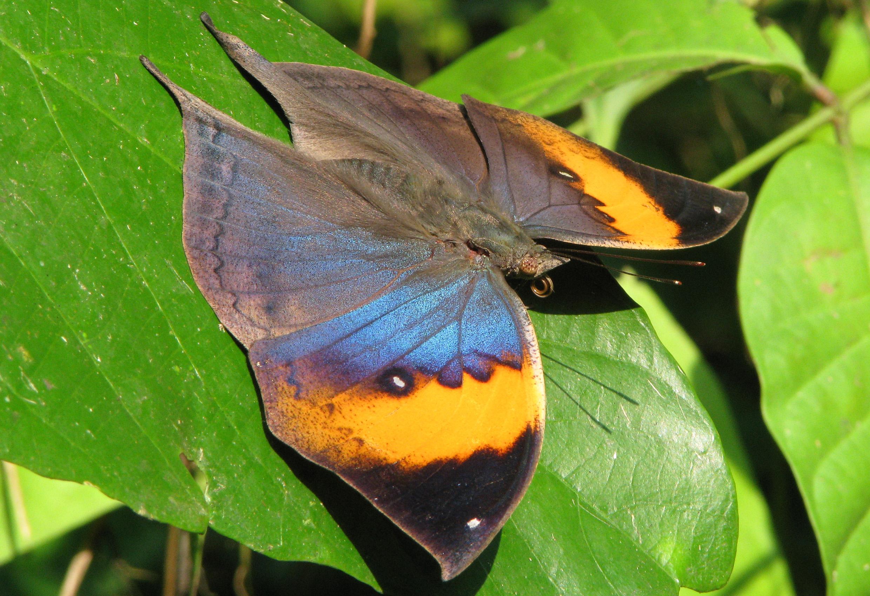 7 case delle farfalle da vedere lifegate for Case belle da vedere
