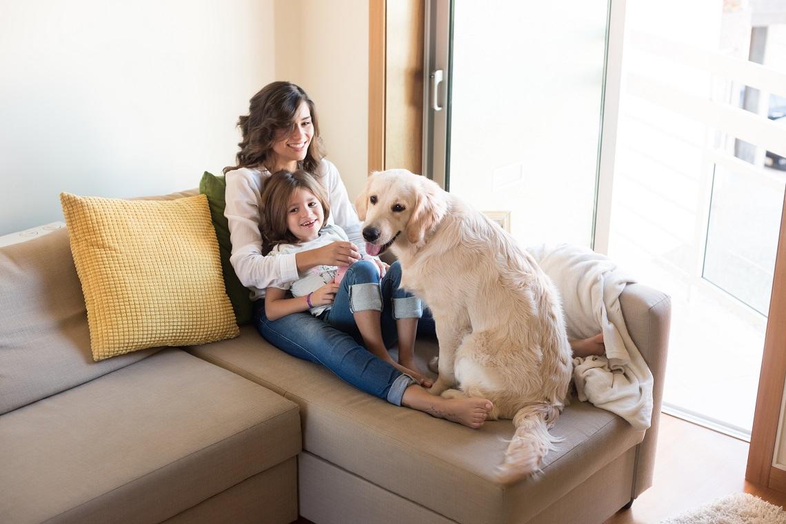Dai tumori al diabete come i cani ci salvano la vita lifegate - Perche i cani scavano sul divano ...