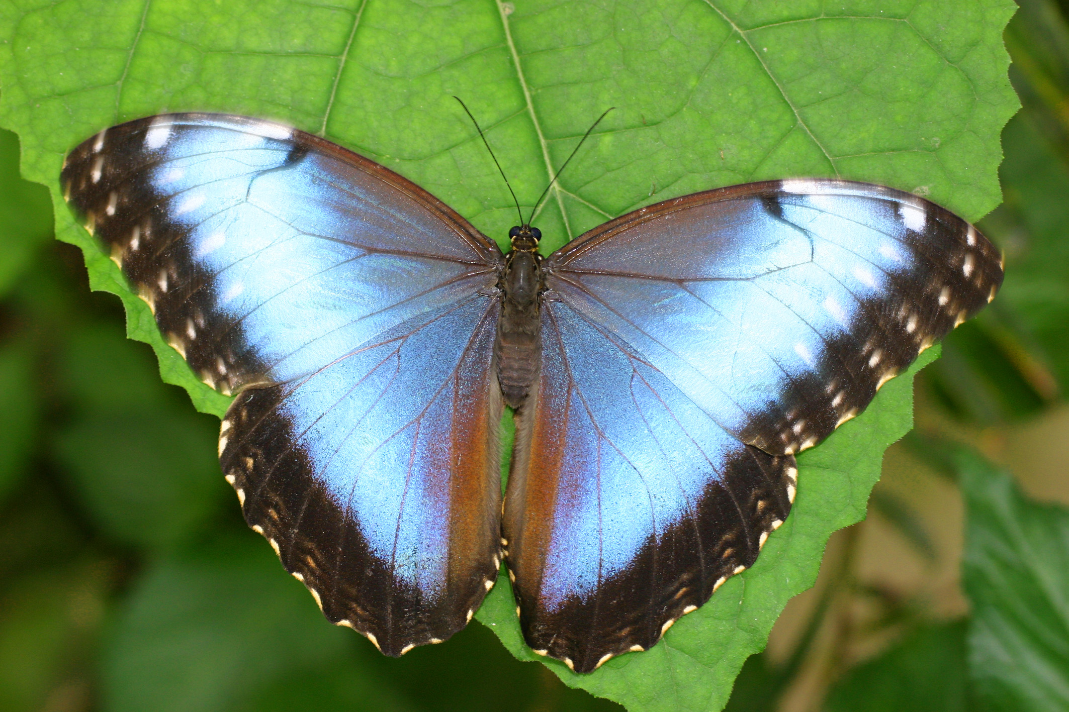 7 case delle farfalle da vedere lifegate - Immagini di farfalle a colori ...