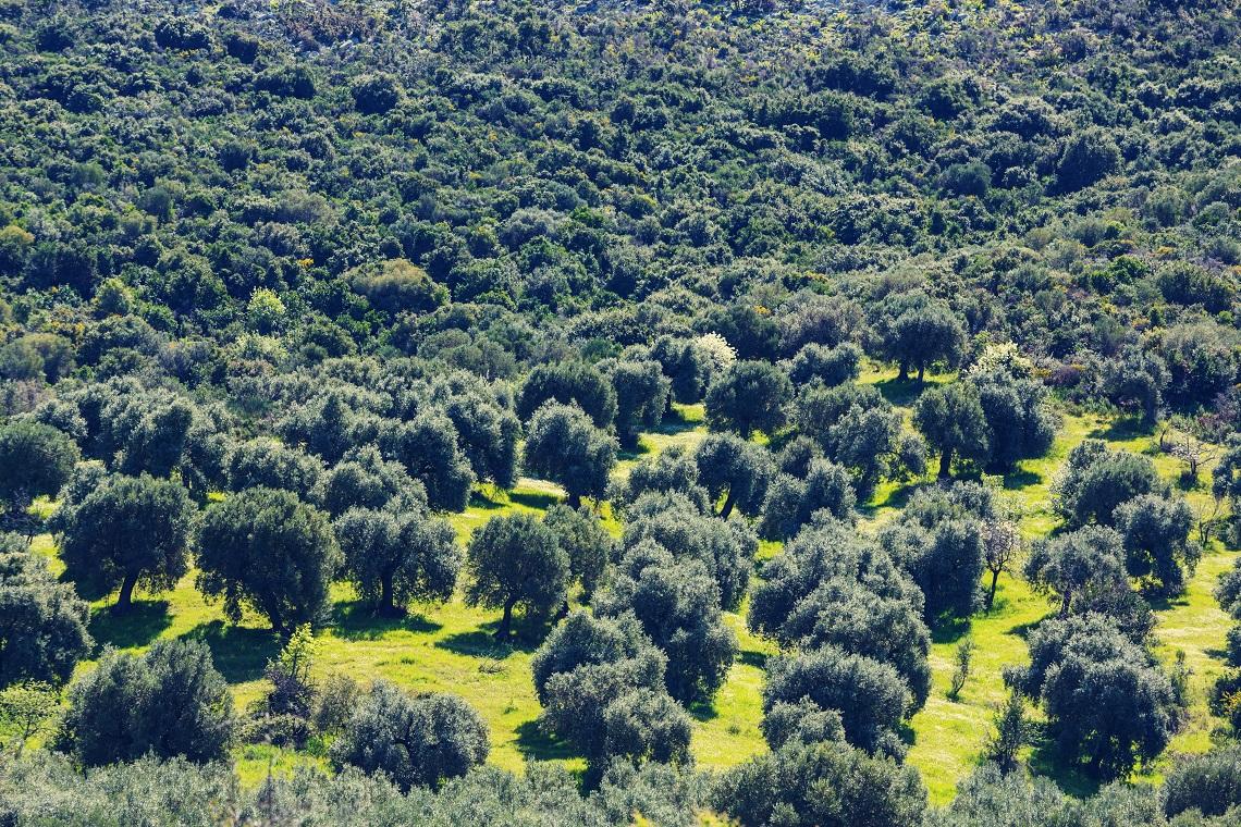 Carbonio che risale alberi viventi
