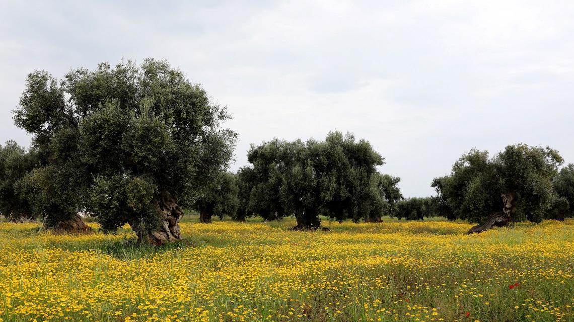 Il 14 maggio è l'Overshoot day 2020 d'Italia - LifeGate