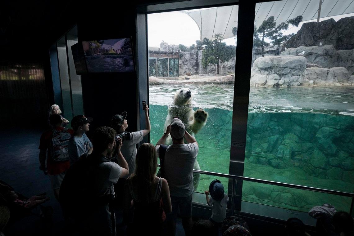 Orso polare nella vasca dio uno zoo circondato da spettatori che lo fotografano
