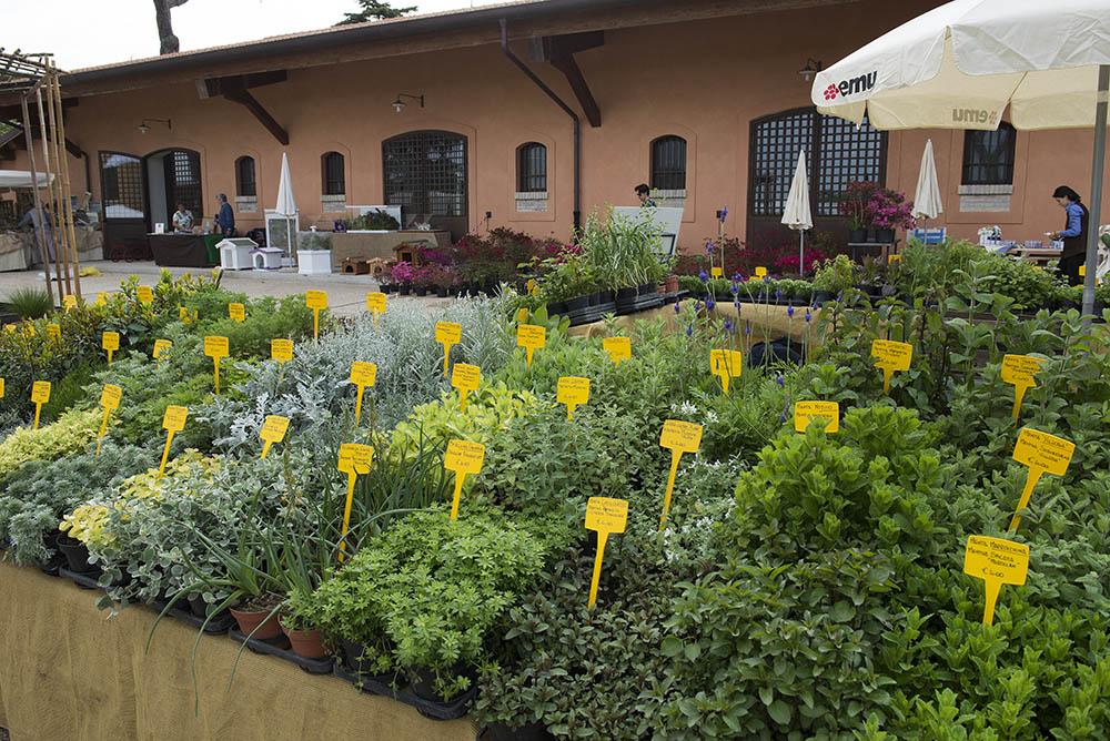 Orto di marzo cosa piantare e lavori del mese lifegate for Cosa piantare nell orto adesso