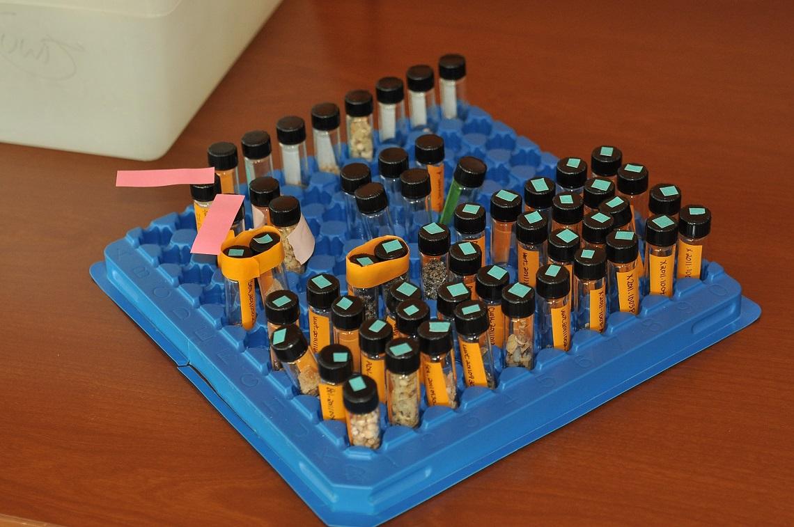 Frammenti di microplastiche da analizzare