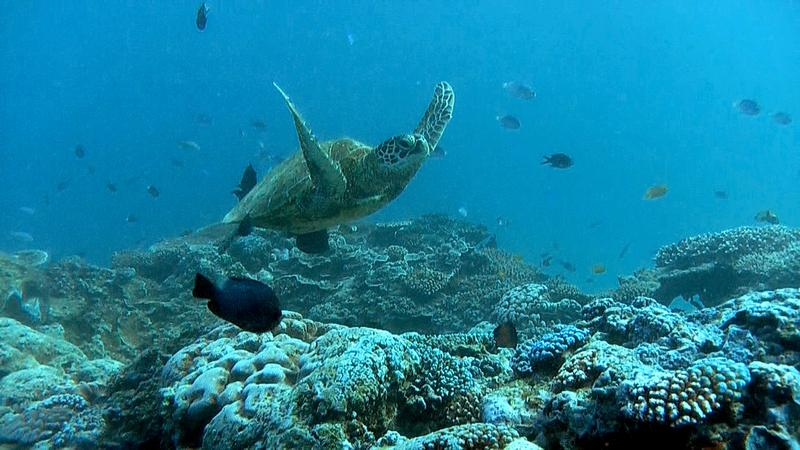 Video Screen Grabs from Great Barrier Reef Clipreel