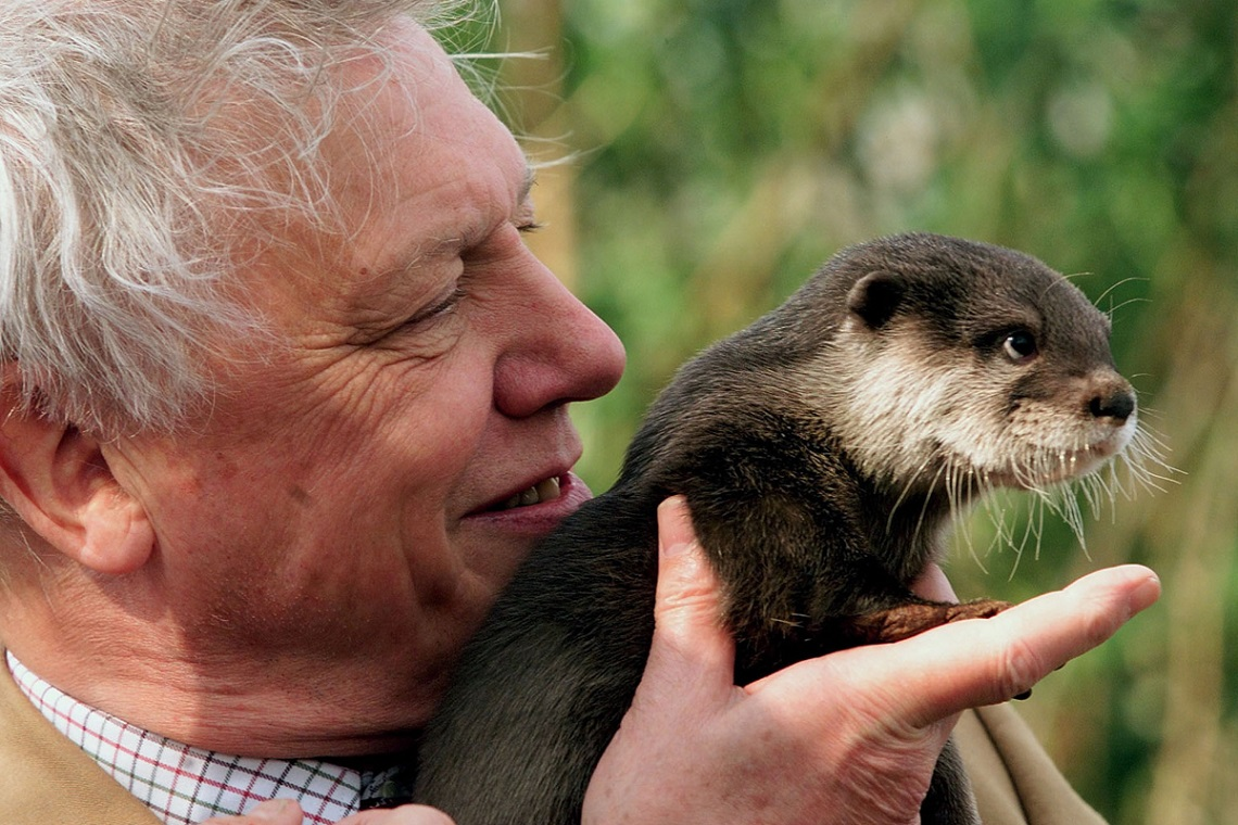 Famous naturalist Sir David Attenborough holds 'Little Bee' a baby Asian Otter during an event by the river Thames near Windsor March 23. A scheme was announced today in an attempt to help return otters back to the river Thames where numbers have been dwindling for years. DJM/AS - RTRN7DU