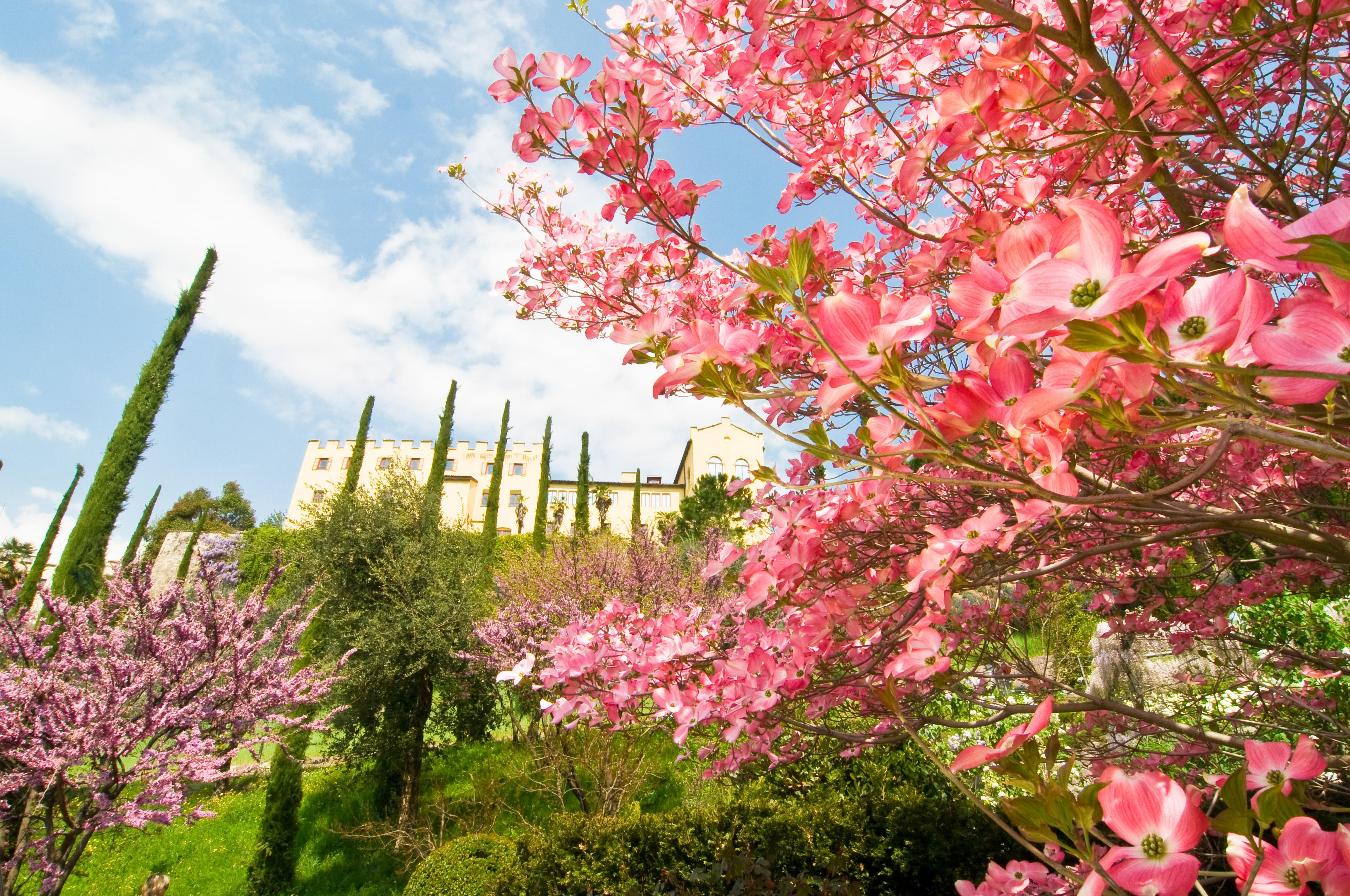 Parchi e giardini in fiore dove si trovano quelli pi for Giardini immagini