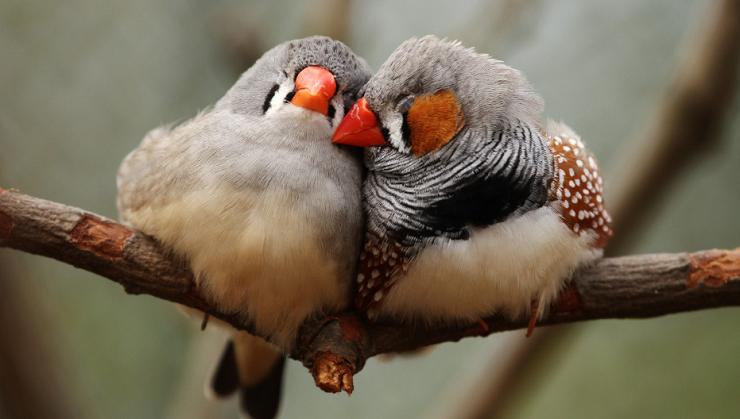 Gli uccelli innamorati generano pi pulcini lifegate - Semplici disegni di uccelli ...