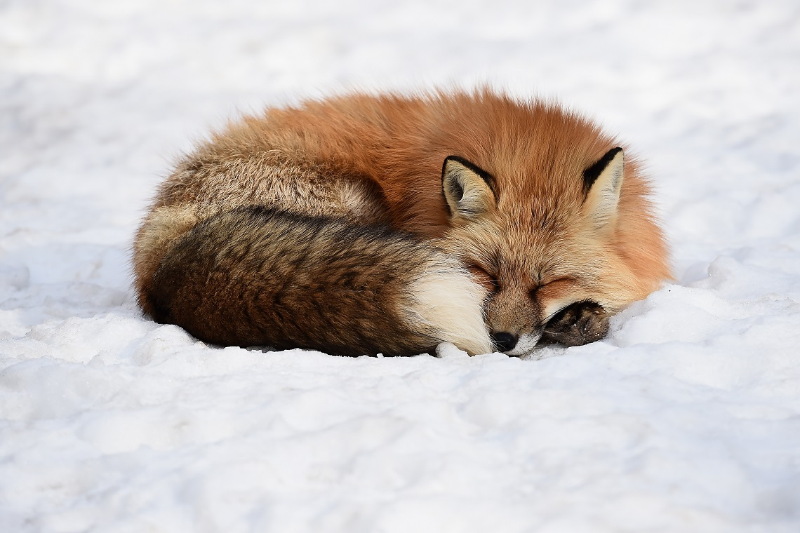 Tempo di riposo la giornata mondiale del sonno 2018 - Animali in inverno clipart ...