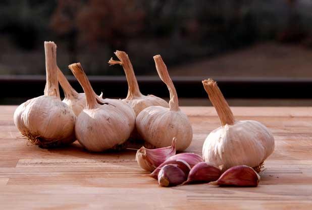aglio-rosso-sulmona