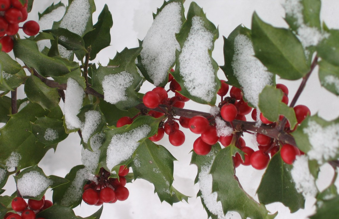 10 piante resistenti al freddo che fioriscono in inverno - Nomi di piante da giardino ...