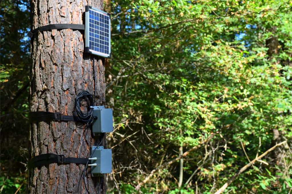 alberi parlanti dispositivo internet cose
