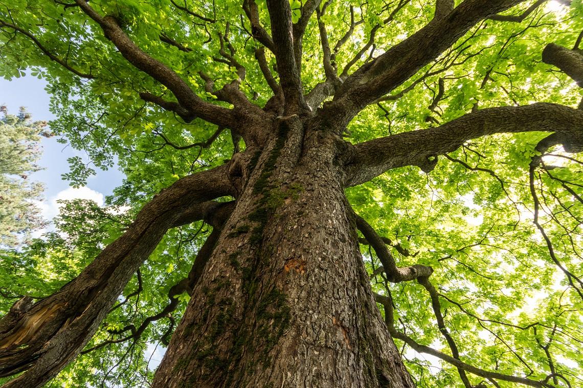 Il 21 novembre la giornata nazionale degli alberi lifegate for Arboles de hoja perenne sin fruto