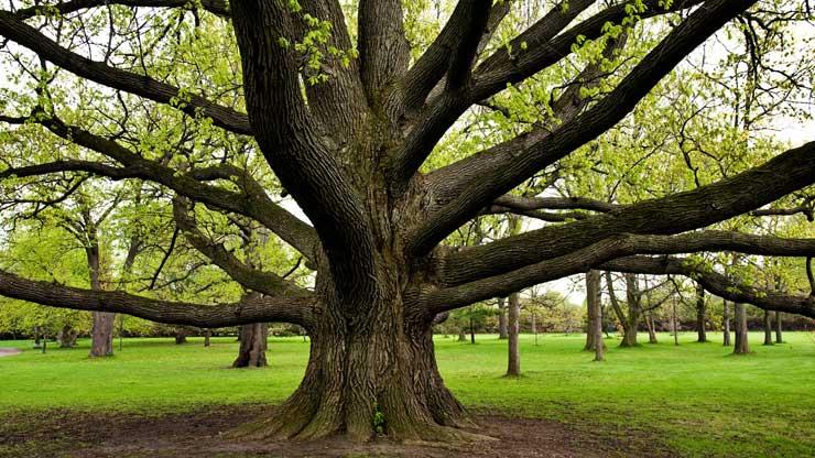 Al centro c 39 l 39 albero lifegate - Immagine dell albero a colori ...