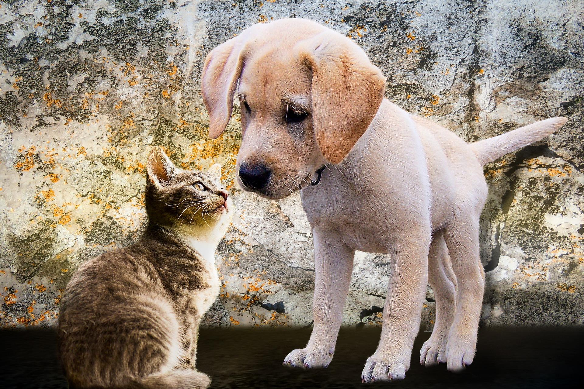abbastanza Cosa devono mangiare cani e gatti d'estate MU04