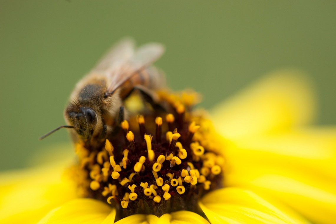 Un momento molto emozionante del film è quando un enorme sciame di api torna a popolare i prati di Apricot Lane, attirato dal rifiorire della vegetazione