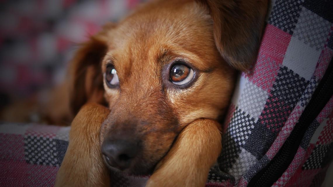 I rimedi omeopatici per il cane