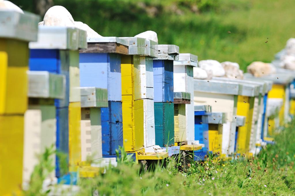 Neonicotinoidi vietati per salvare le api