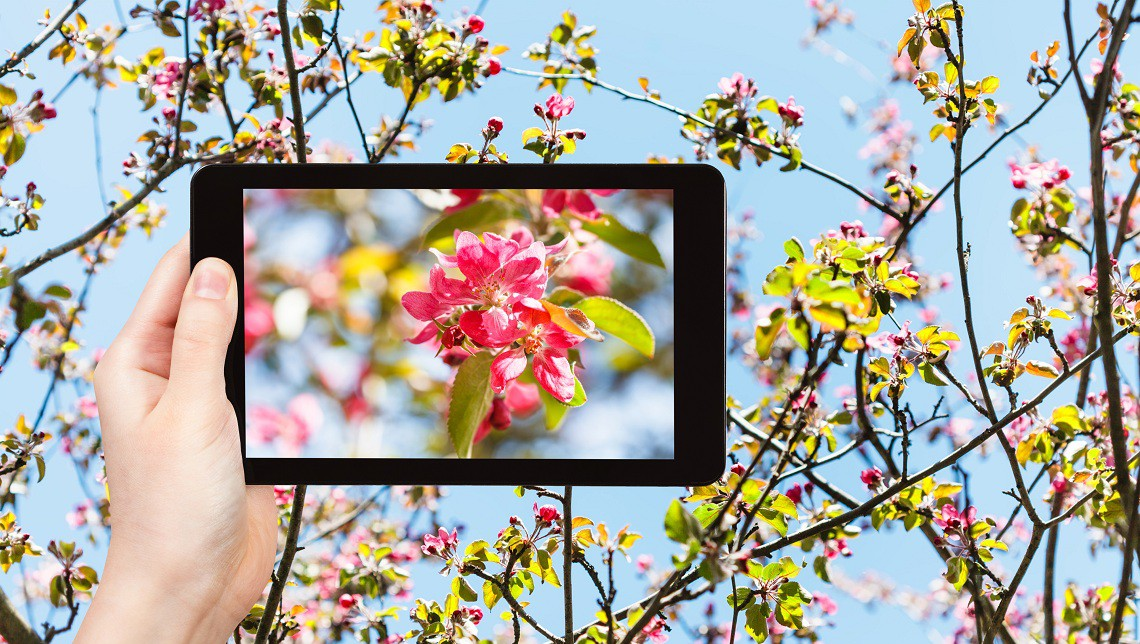Piante e fiori, arriva l'app per riconoscerli  LifeGate