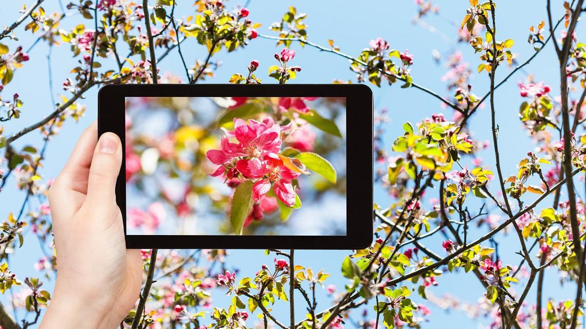 L'app per riconoscere piante e fiori si chiama Plantnet