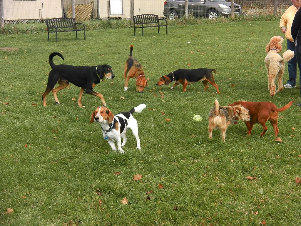 10 consigli per una pacifica convivenza nell area cani - Portare il cane al canile ...