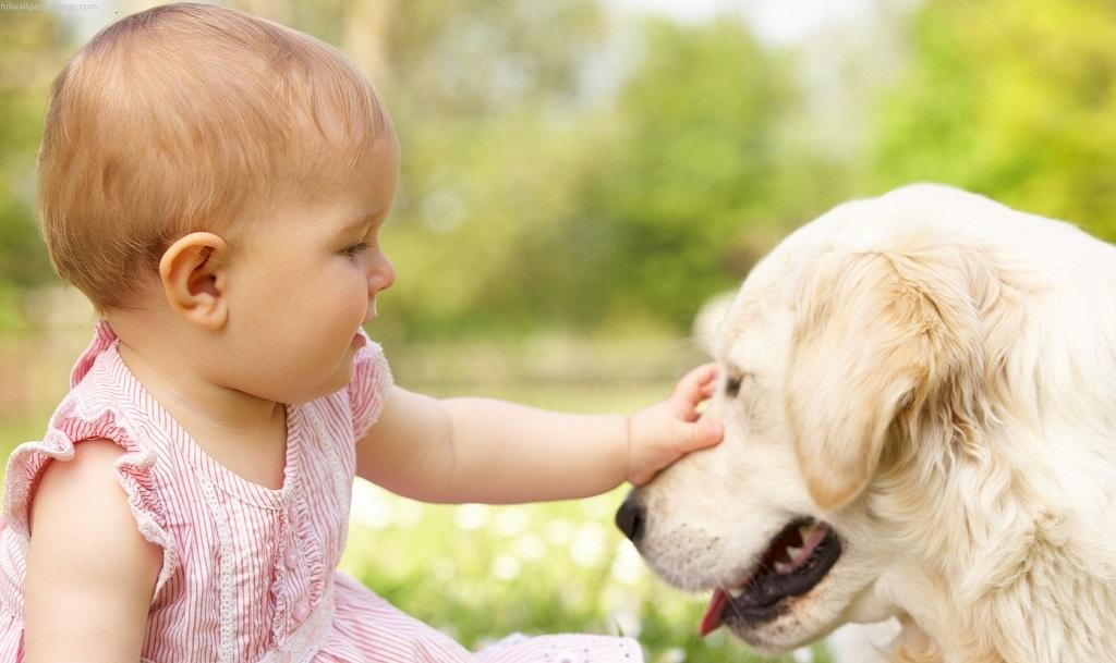bambina accarezza un cane
