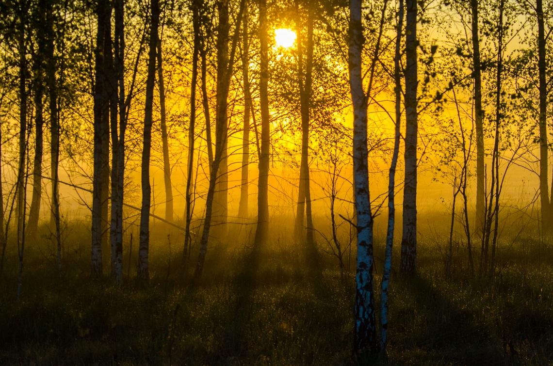 L ue vieta il taglio della foresta di bialowieza ma la for Cabine della foresta lacustre