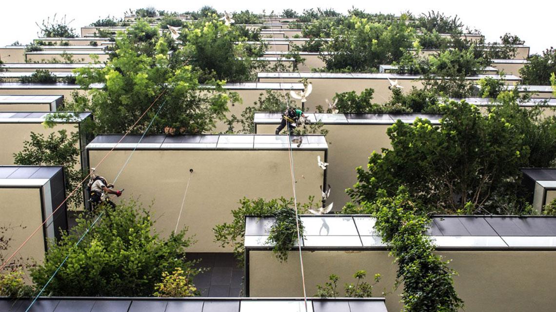 Tetti verdi e giardini verticali per promuovere la - Progetti per giardini ...