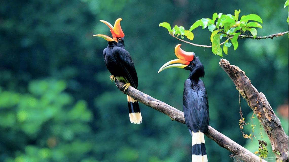 Etologia del corteggiamento l 39 amore nel regno degli uccelli for Dimensioni del garage di 2 e mezzo