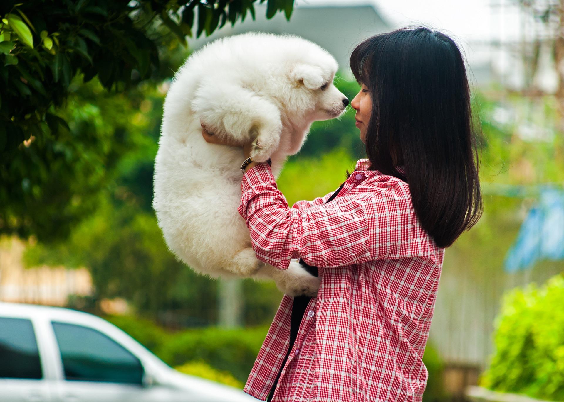 Consigli utili su cosa fare al primo calore della cagnolina - Quando fare il primo bagno al cane ...