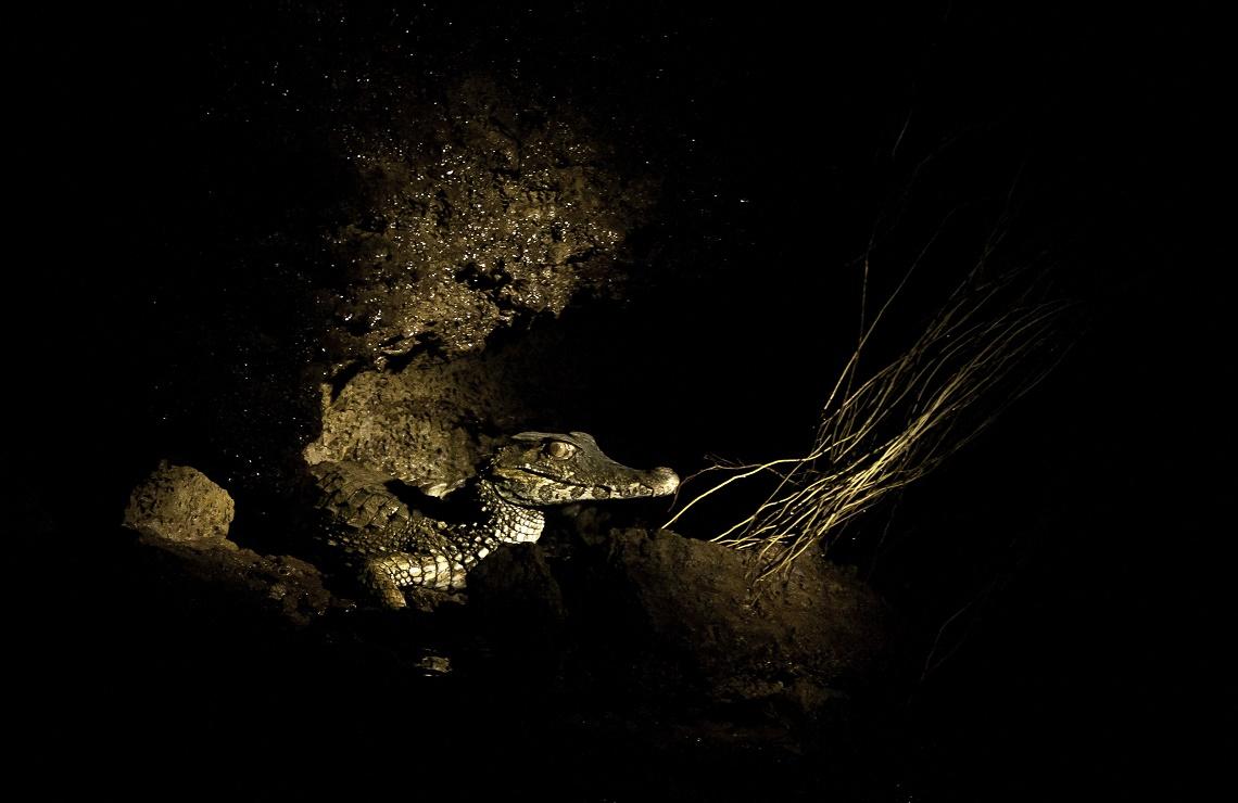 Caimano in Amazzonia