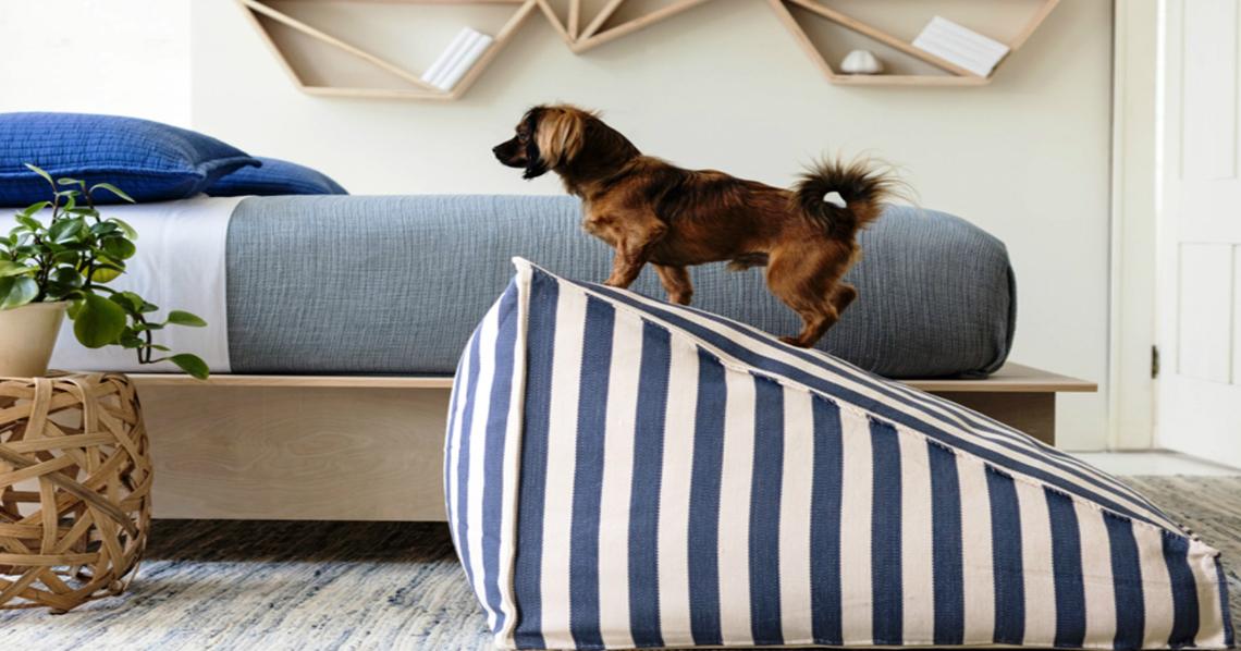 La casa dei pet lover lifegate for Piani casa com classico cane trotto stile