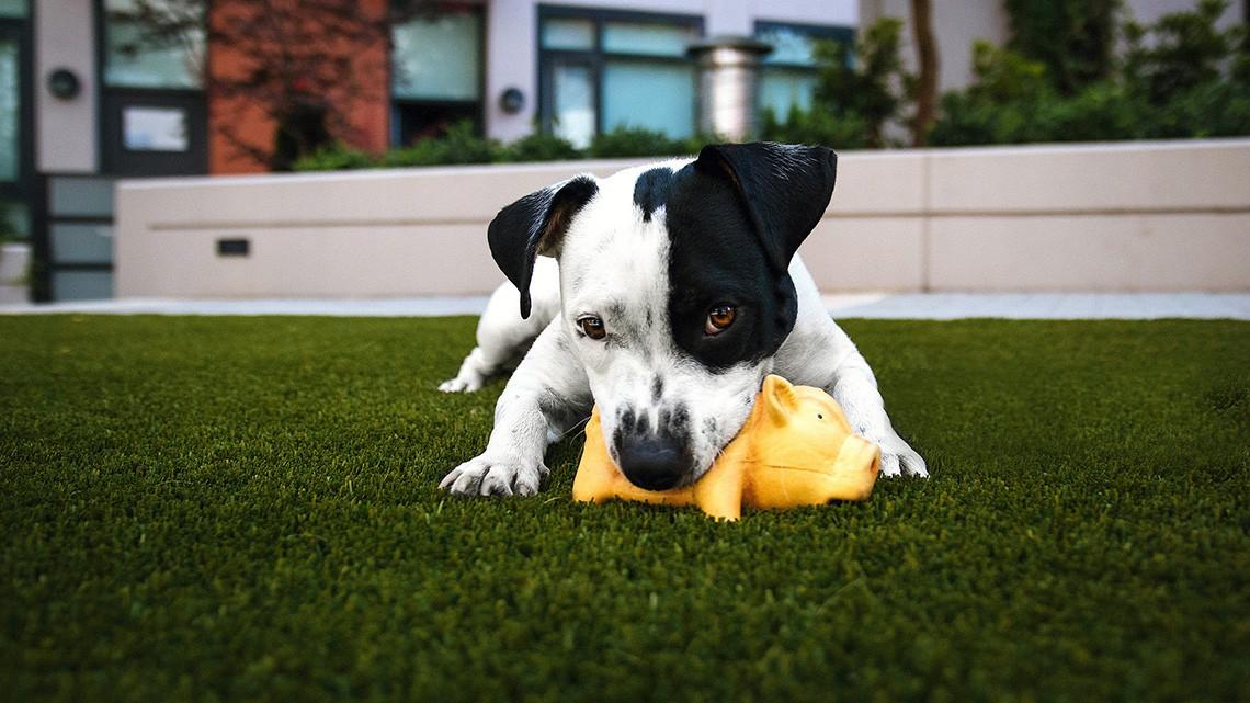 Come Capire Se Il Cane Che Non Mangia è Viziato Con I Consigli Della