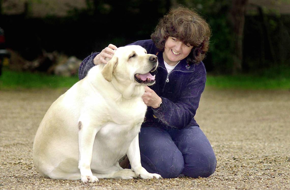 Cosa Fare Se Il Cane è Grasso Esercizi E Dieta Per Farlo Dimagrire