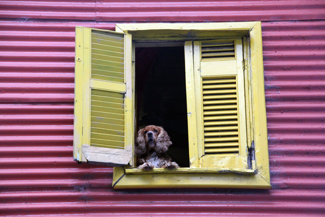 Dog in the open window of house in Buenos Ayeres