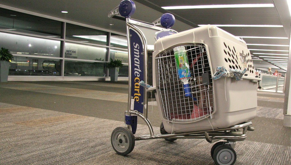 Cane in un trasportino all'aeroporto
