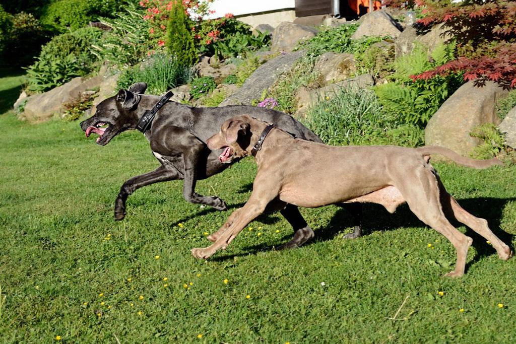 Traumi Stiramenti E Ferite Nel Cane Come Prevenirli E Curarli