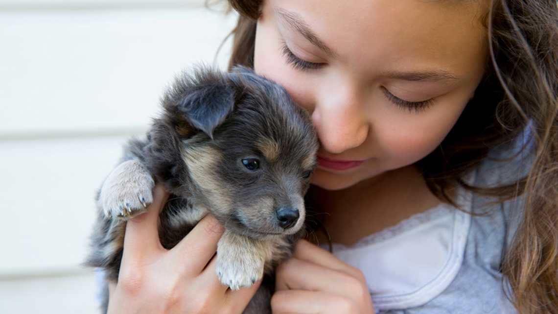 Cani e gatti le razze pi adatte ai bambini lifegate for Casa progetta il trotto del cane