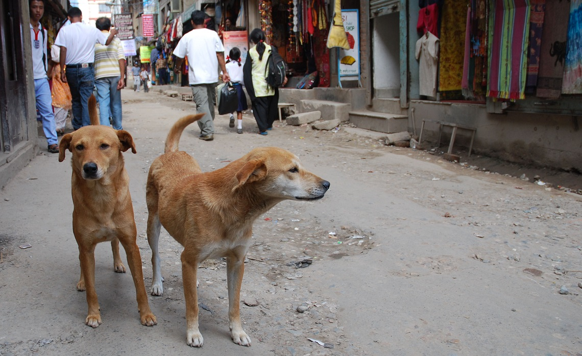 cani in Nepal