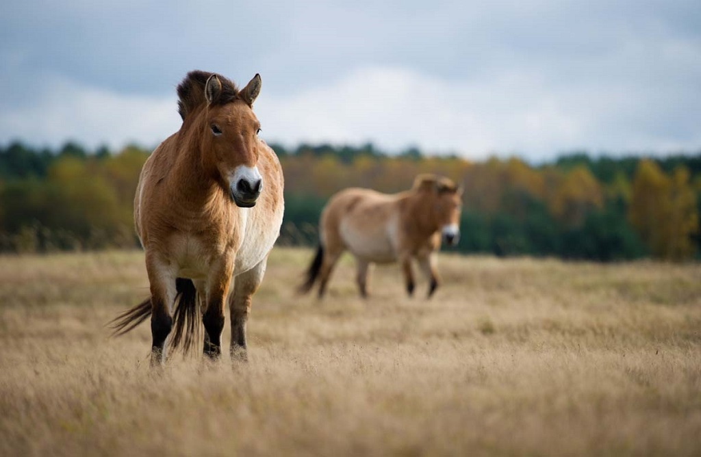 GERMANY-ANIMAL-NATURE-RESERVE