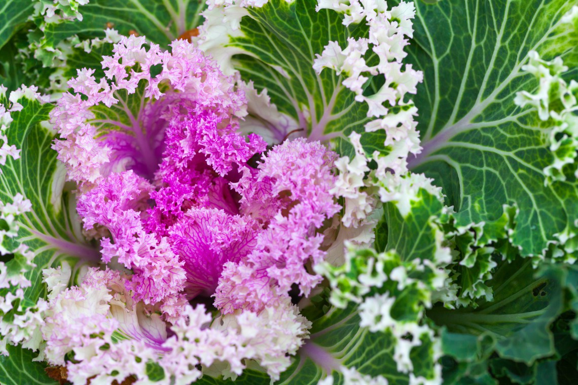 10 piante resistenti al freddo che fioriscono in inverno - Piante invernali da giardino ...