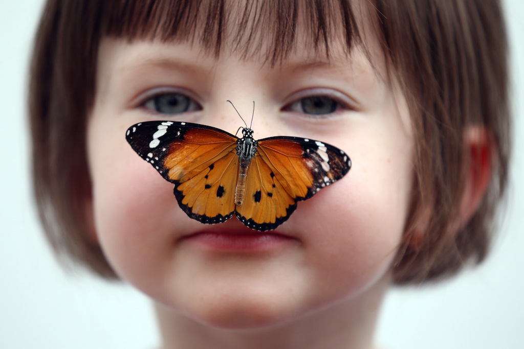 Sensational Butterflies Exhibition Launches With Hundreds Released