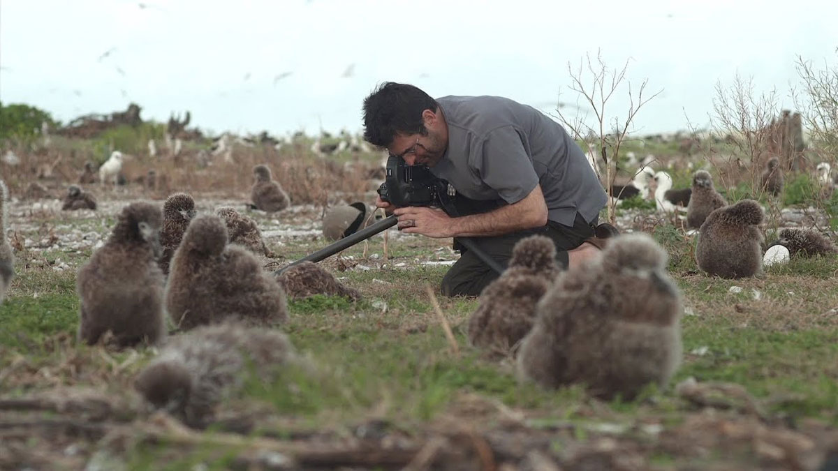 Il fotografo Chris Jordan fotografa gli albatross sull'isola di Midway