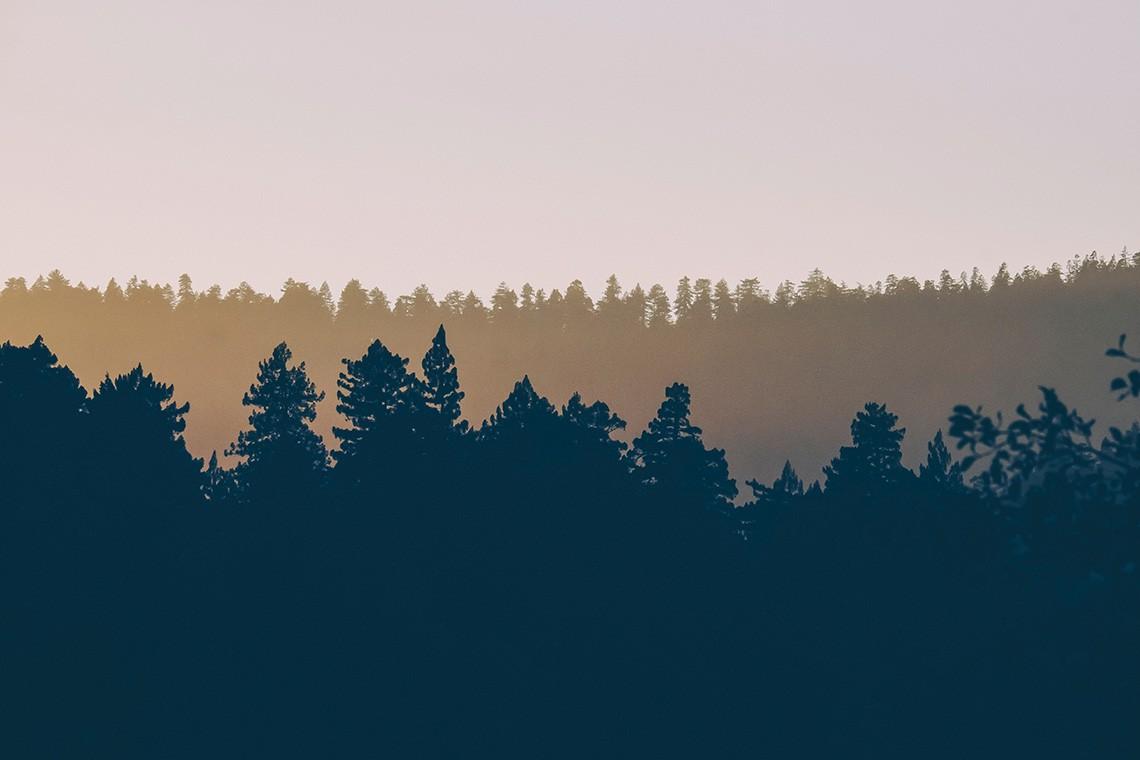 deforestazione, cambiamenti climatici